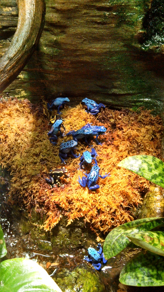 Poison Dart Frog Exhibit