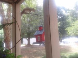 Squirrel caught in the act by Linda Martin Andersen. Copyright 2016