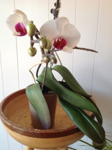Orchid. Copyright 2016. Linda Martin Andersen