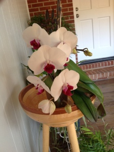 Orchid with more open blooms. Linda Martin Andersen. Copyright 2016